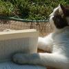 【短編小説】猫が好きな人におすすめする厳選小説3作