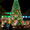 【2018年ハワイ ep.3】ハワイのクリスマス!ホノルル・ハレ(市庁舎)のシティ・ライツ・2日目【2018.12.2】