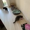 猫姉妹、大接近中。