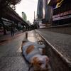 大都会バンコク、非常事態宣言、人の生活、タイ猫の生活。散歩でスマフォト!