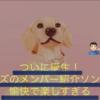 StrayKids オリジナル日本語曲「FAM」が想像を超えてきて楽しすぎる