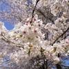 〈Nature〉春爛漫