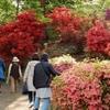 GWの旧古河庭園と六義園に行ってきました