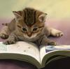 本を読む時間がないと嘆いているあなたへ(読書術、速読、片付けの魔法)