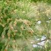 今年の花粉は去年の1.5倍! あなたのクルマの花粉対策は?