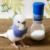 【ここすけの日常】インコが飼いたくなる動画集まとめ【budgerigar】
