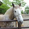 【いい年の大人が紹介する】千葉市動物公園/お土産・食べ処【後編】