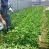 第137回(2016.5.25)<野菜収穫体験に参加して感じた事>