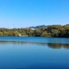 春の山田池公園、花に野鳥と鯉