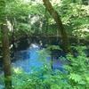 青森県白神山地の十二湖付近にある青池が絶景。アクセス方法と写真