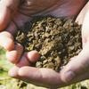 イセグリーンという有機質肥料を使っています