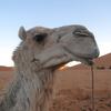 #055 メルズーガ砂漠で野宿してみた。② (2010.6)