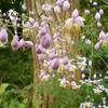 癒やしの花