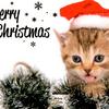 クリスマスカードとプレゼント~from北海道東川