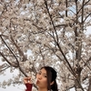 【桜の木の下で】
