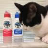 猫グッズの洗濯洗剤を考える