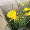 自己愛のまたそれもよし春の庭