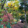 庭の紅葉、満開です。