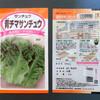 青シマサンチュウの種蒔き