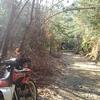 冬の木漏れ日の林道へ