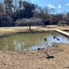 清瀬金山緑地公園の池(東京都清瀬)