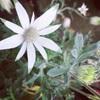 育てやすくて可愛い花