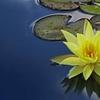 今日のマヤ暦「美しいものに触れましょう」。KIN68 黄色い星・白い世界の橋渡し・音3