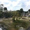 グアテマラ ティカル遺跡観光 「グランプラザ(1、2号神殿)」広場より