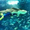 久々のサンシャイン水族館。トラフザメは元気でした!