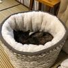 新しい猫ベッド満喫