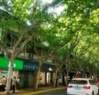 《上海》新天地はフランス租界のお洒落な街。豫園から近かった!
