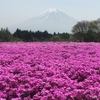 2つの富士山が見える富士芝桜まつり