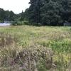 【その③(最終話)】カインズの除草剤(グリホサート41%)の効果は?荒地の雑草を始末する!