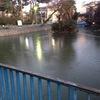 本門寺公園の弁天池