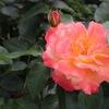植物園の春の花