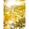 秋の黄色をきれいに撮るには♪ 秋色にほっこり癒されて。