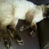 大好きな猫。(ちょっと悲しいお話)