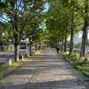 佐賀県で生きています!