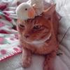 便秘のツボ 〜 猫には「百会」が二つある