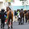 JRA単勝回収率「516%」のアノ馬が2歳戦でドゥラメンテ、モーリスを凌駕! 穴馬券連発で注目の存在に