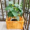 「バケツ&収穫コンテナ」を使った大型野菜用の水耕栽培装置の作り方。本体と支柱を分けることで強度を確保しています