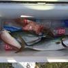 友釣り40投目「1投目にすべての力を注いで釣ったイナダ」