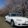 【NB6C】桜に彩られて