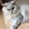 六月の八ヶ岳 猫さん