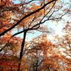 大平峠の紅葉
