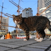 12月前半の #ねこ #cat #猫 その2