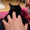 今日の黒猫モモ&白黒猫ナナの動画ー925