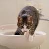 皿洗いしながら瞑想し風呂で読書した