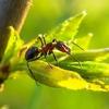 【哲学】蟻に意識はあるだろうか