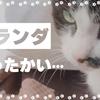 【猫のルーティン #37】